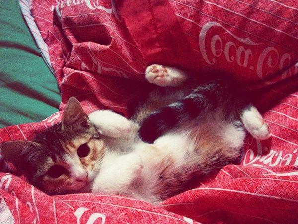 Mon bébé chat ❤️
