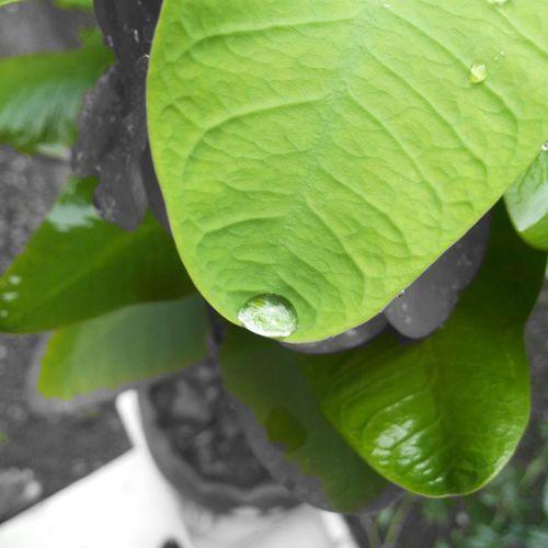 Picoftheday Noedit MyClick Color Green Leaf InstaCrop Likeforlike L4l Follow4follow F4F Loveig