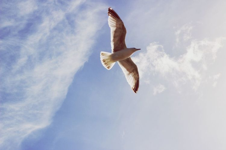 Low Angle View Mid-air Flying Cloud - Sky Sky Spread Wings Animal Themes Day Full Length Nature One Animal Outdoors Motion Jumping Animals In The Wild Bird No People Beauty In Nature Energetic Mammal Canoneos CanonEOS600D Canon Canonphotography Canon600D