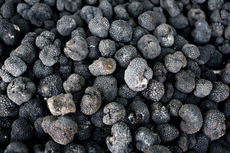 Black truffle background, delicious gourmet food ingredient Background Backgrounds Black Color Black Truffle Close-up Day Food Food And Drink Food And Drink Freshness Full Frame Indoors  Ingredient Large Group Of Objects Mushroom Nature No People Precious Stack Textured  Truffle