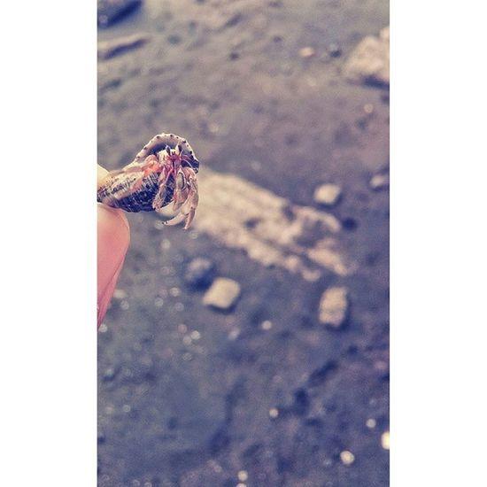 Hermit Crab Hermitcrab Crab Hermit Itsmorefuninthephilippines nature wowphilippines philippines pinas phonephotography phone samsung samsungasia travel travelasia travelphiliplpines mindaNOW filipinas wanderlust seepilipinas tourism nationalgeographic natgeo discovery