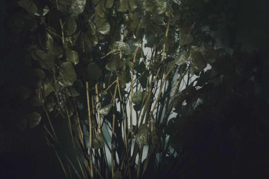 The Week On EyeEm Leaf Nature Plant Growth No People Beauty In Nature Outdoors Day Close-up Nightphotography Light And Shadow