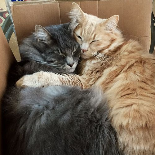 Two brothers Cats 🐱 Cats Of EyeEm Pets Relaxation Day Indoors  Feline Togetherness Close-up Mammal Eyes Closed  No People Pet Portraits Domestic Cat Cardboard Box Animal Themes Domestic Animals The Week On EyeEm