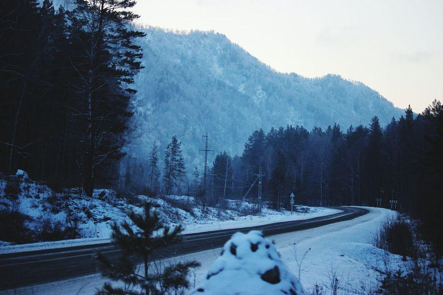 деревья горы Mountains природароссии Altay Алтай пейзаж горноалтайск Snow ❄ Природа Naturerussia АлтайскийКрай Road Дорога Adventure Club Shades Of Winter