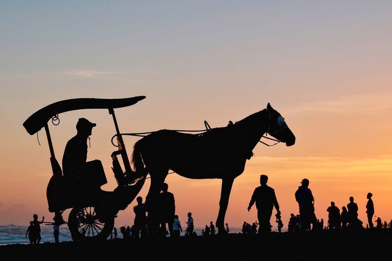 Silhouette at the beach Sunset Central Java INDONESIA Yogyakarta Parangtritis Beach Mammal Domestic Animals Domestic Animal Wildlife Group Of People Livestock Nature Ride Activity Outdoors Horse Working Animal Real People