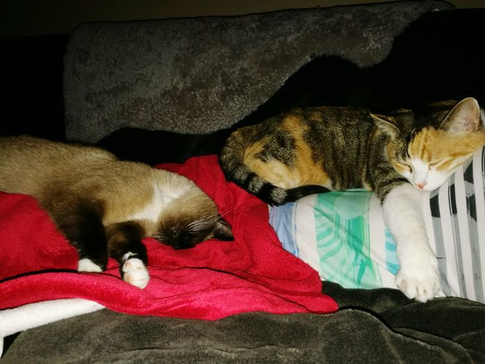 Domestic Animals Sofa Relaxation Sleeping Home Interior Cocooning 💖 Cool!! Praline My Cat Kitty Kat Amores  My Home Cocoon My Life My Home Sweet Home❤️