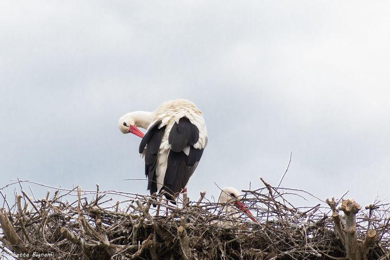 Nature Photography Animal Animal Family Animal Themes Animal Wildlife Animals In The Wild Bird Cicogna Oasis