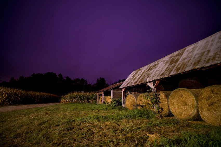 Hay Shed Side View Purple Sky Green Grass Purple Sky Agriculture Beauty In Nature Cornfield Farm Field Grass Green Grass Hay Bale Hay Shed Landscape Nature Night No People Outdoors Rich Colors Rural Rural Scene Sky Tree Silhouette