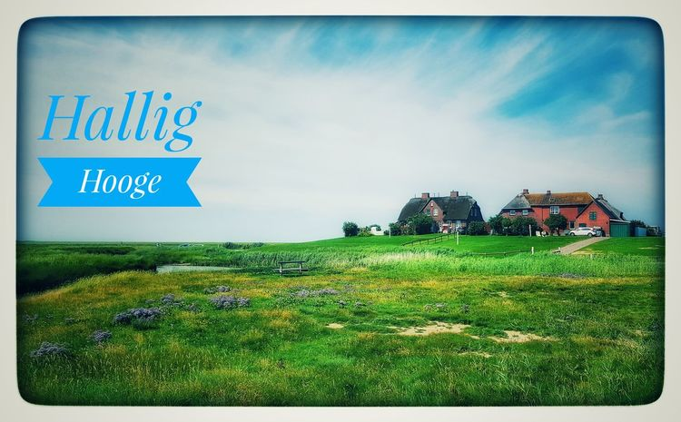 Green Color Outdoors Day No People Grass Sky Nature Island Hallig The Week On EyeEm First Eyeem Photo