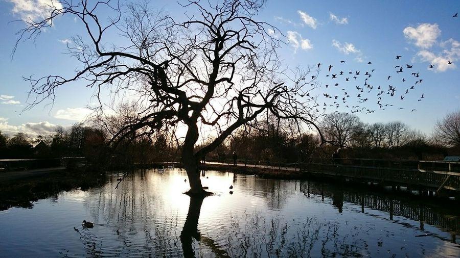 EyeEm Best Shots EyeEm Best Shots - Landscape Trees Water_ Collection  Water_collection