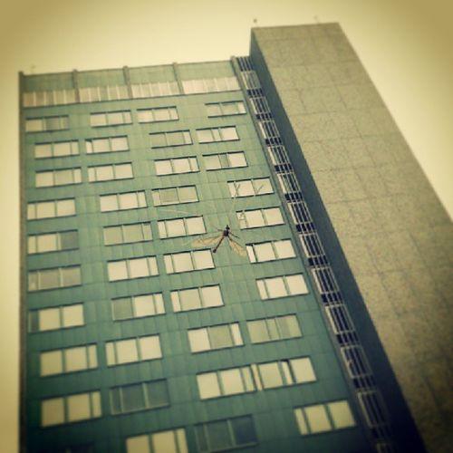 OMG! A giant crane fly! Cranefly Harkrank Monster Building sweden