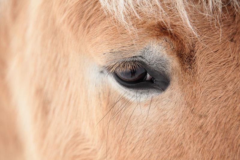 Adult Adults Only Animal Body Part Animal Eye Close-up Day Eyelash Eyesight Horseeye Human Body Part Indian Elephant Mammal One Animal People Sensory Perception