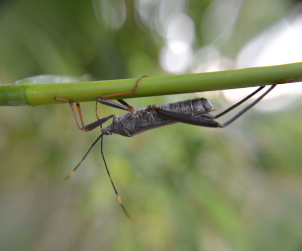 Bug upside down hangging