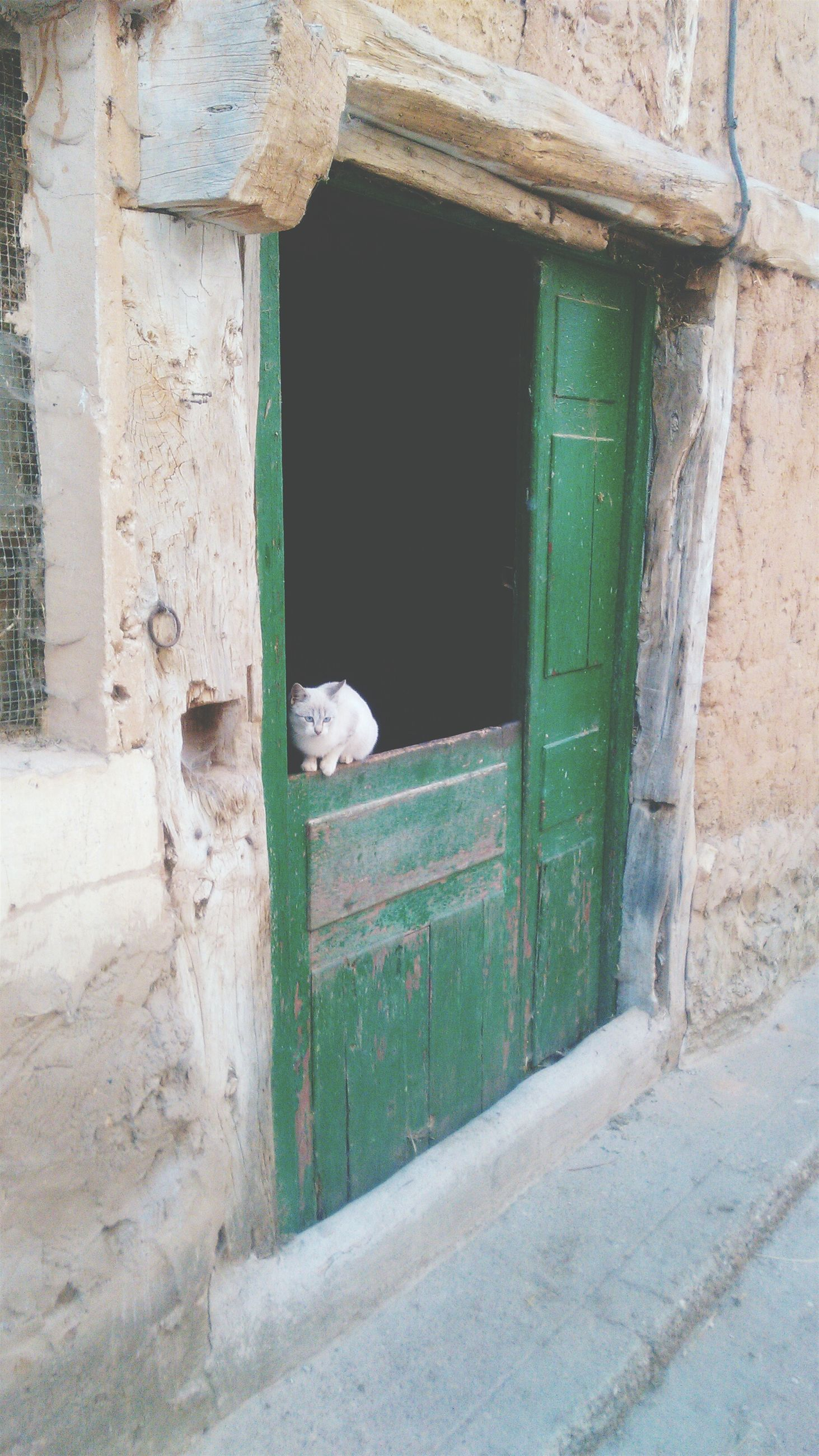 animal themes, one animal, built structure, architecture, building exterior, mammal, domestic animals, window, house, pets, wall - building feature, domestic cat, wildlife, cat, outdoors, day, no people, door, brick wall, stone wall