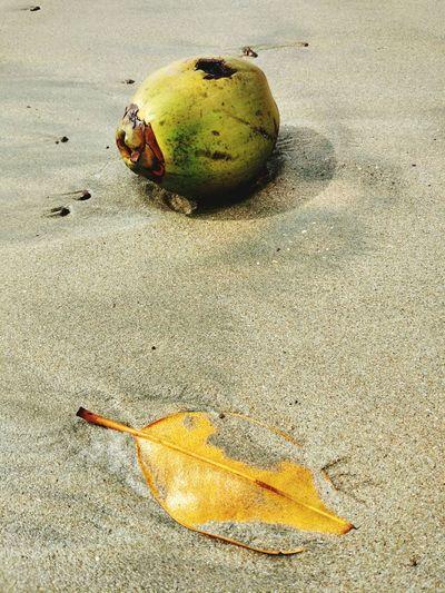 Coco and Leaf Creative India Creativity Agonda Beach Goa Fallen Fruits Coconut Sand Beach Nature Outdoors Fruit No People Day Leaf Beauty In Nature Sea Life Close-up Rotting