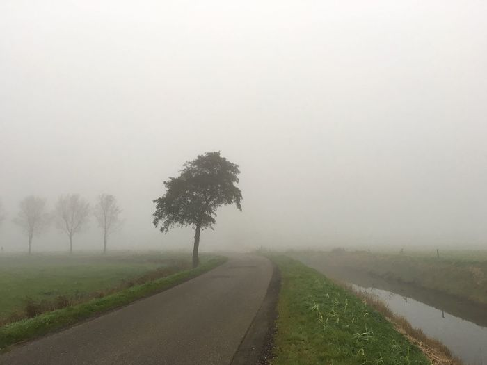 Road amidst trees on grassy field during foggy weather