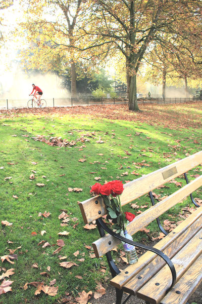 Autumn Of Our Lives Battersea Park Cyclist In Red Late Autumn London Parks Lost Love Lost Loved One Memorial Park Bench Red Roses Remembering Ride Roses In A Bottle