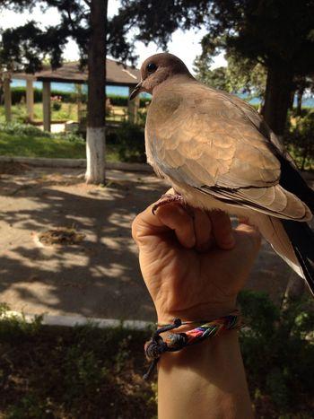 i found a friend Bird Photography Animals Nature_collection Birdlover Friend Dove Freedom Kumru Guvercin