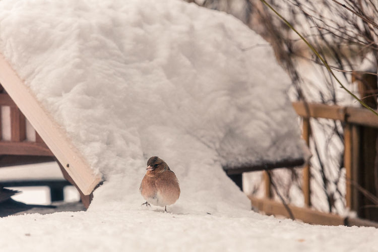 Bird perching on snow covered ground