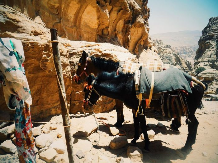 Side view of horses standing on rock