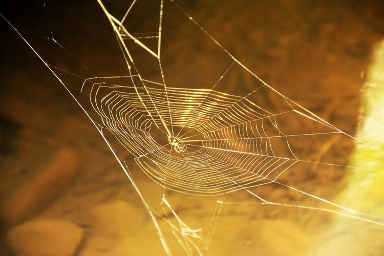 Pattern Reflection Water Above Water Spider Webbed Concentric Spider Web Spider Close-up Natural Pattern Web Spinning