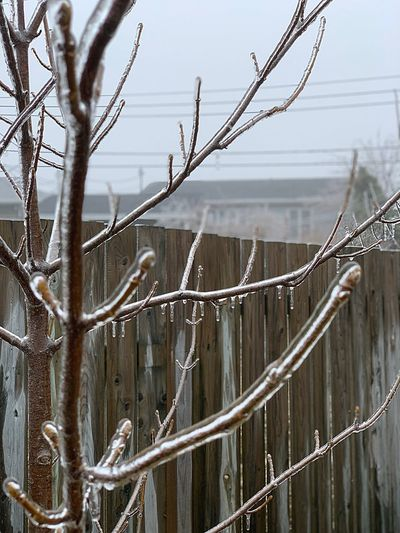 Ice EyeEm Nature Lover EyeEm Best Shots Tree Nature Day No People Plant Branch Winter Cold Temperature Sky Bare Tree Outdoors Snow Focus On Foreground Close-up Fence Icicle Frozen My Best Photo