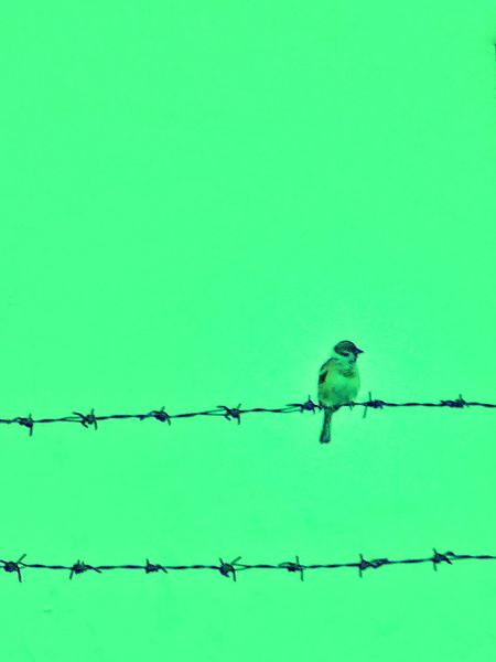 Follow The Birds 😄 Green Color Animal Wildlife Security Barbed Wire Bird Protection Safety Outdoors Animal Themes Nature Security System Animals In The Wild Backgrounds No People Beauty In Nature Perching Day Somewhere In The World Capture The Moment Capture The Light Somewhere I Remember Places Around The World Somewhere Over The Rainbow Beauty In Nature