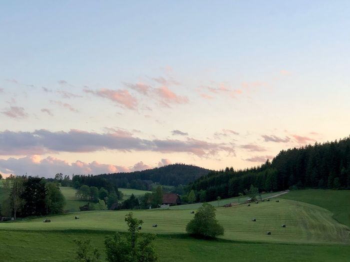 Schwarzwald Black Forest Sky Scenics - Nature Tree Plant Beauty In Nature Green Color Cloud - Sky Sunset Grass Nature Idyllic Land No People Landscape