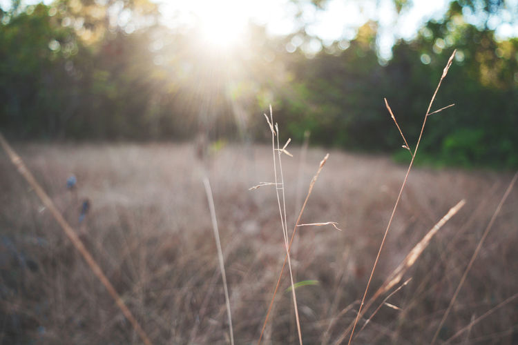 Beauty In Nature Blade Of Grass Bright Brightly Lit Close-up Day Field Focus On Foreground Grass Growth Land Lens Flare Nature No People Outdoors Plant Sky Sun Sunbeam Sunlight Sunny Timothy Grass Tranquility Tree