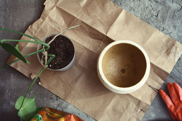Gardening High Angle View Food And Drink Cup Still Life Table Directly Above Drink Freshness Coffee Cup No People Mug Coffee - Drink Refreshment Nature Day Coffee Indoors  Food Plant Close-up