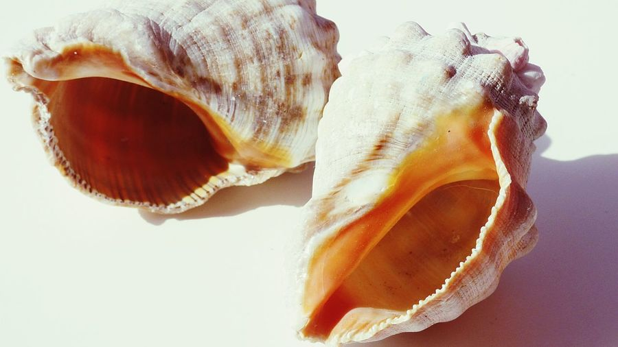 The Shells i love this Sea Shells Negative Space Close Up White Background White EyeEm Gallery EyeEm Macro Two Shells Taking Pictures Taking Photos EyeEm x WhiteWall: Abstract
