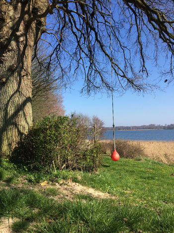 Schlei Beauty In Nature Branch Day Grass Hanging Horizon Over Water Nature No People Outdoors Scenics Schaukel Swing Tree Water