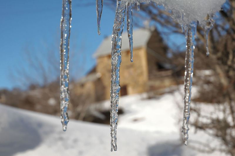 Close-up of icicles on tree during winter