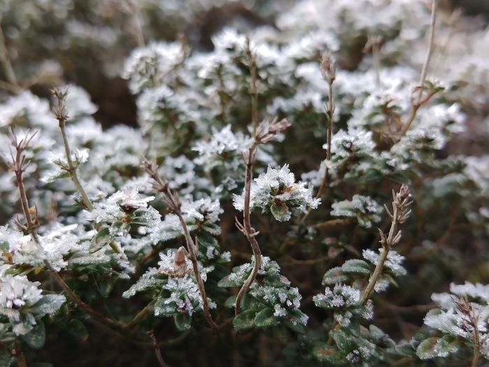 Frosty forest mini Whitefrost Winter Cold Temperature Nature Frozen Close-up Plant Beauty In Nature