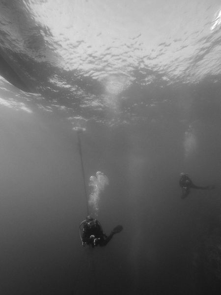 During the safety stop on Pescador Island, Moalboal (Cebu, the Philippines) Adventure ASIA Black & White Cebu Extreme Sports Leisure Activity Lifestyles Nature Outdoors People And Places Philippines Real People Scuba Diver Scuba Diving Sport Swimming Travel Travel Destinations UnderSea Underwater Unrecognizable Person Vacations
