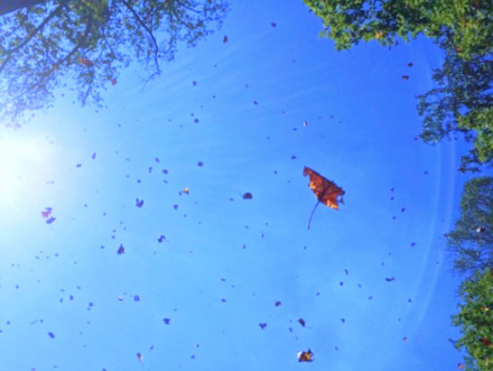 So nice to capture leaves falling from a tree. Falling Leaves Trees Beauty In Nature Blue Blue Sky Day Fall Fall Leaves Leaves Nature No People Outdoors Poplar Leaves Poplar Tree Trees And Nature Trees And Sky
