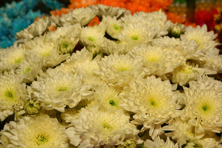 Close-up of yellow flowering plants for sale in market