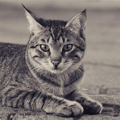 تصويري  عدستي جده جدة البحر الكورنيش نيكون By_me Jeddah Sea Nikon Nikond3200 Nikon D3200 Nikontop Cat