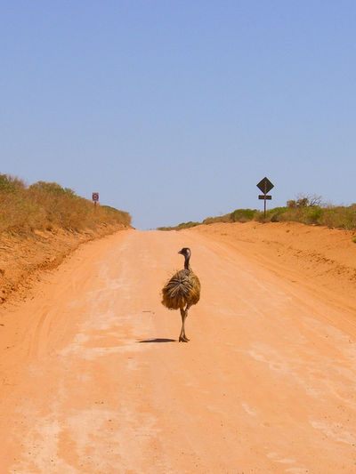 View of an emu on a street