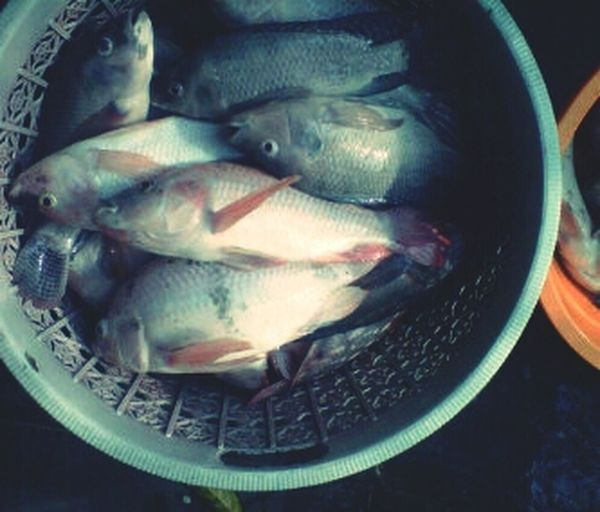 Oh my cutie fish ?