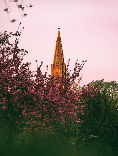 Low angle view of pink flower trees against sky