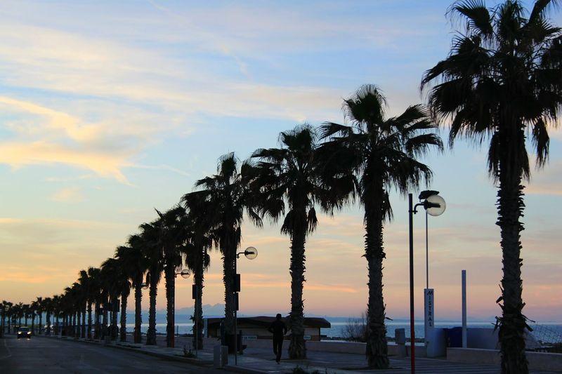 Blue Sky Green Palms Sea Termoli City Termoli  Road