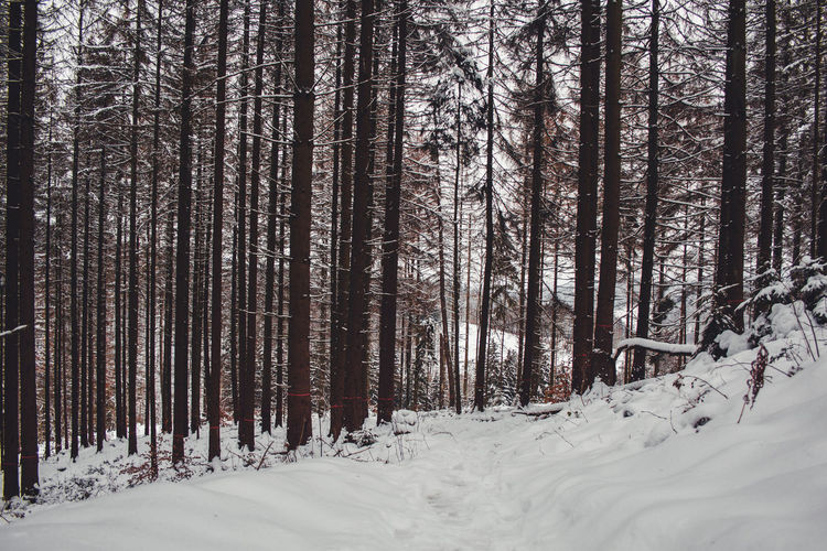 Trees on snow covered land during winter