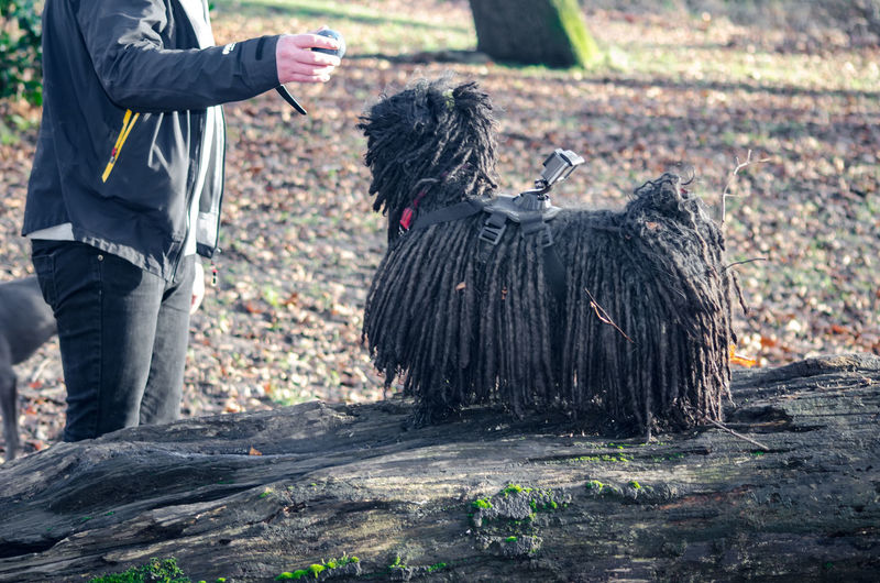 Midsection of man standing by puli dog with camera in forest
