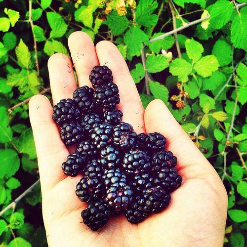 Yürüyüşler pek tatlı Fruit Blackberry Bogurtlen Eat More Fruit
