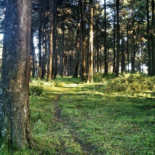 The forest outside Kijabe Sony_xperia Xperia_nceKenya OnetouchLive ShootingKenya Snapseed EnigmaImages
