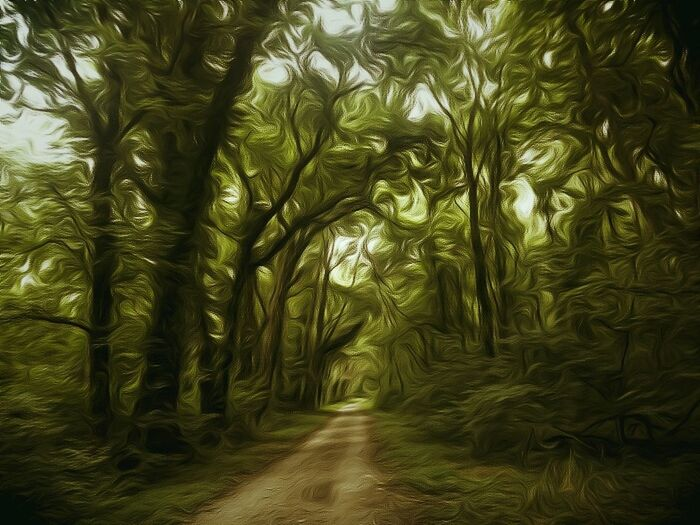 Lonly Road Creepy Just For Shits And Giggles Lost Places Edited My Way Furryforest Feeling Creative Imaginative EdiTteD JuNky Crazy Edits  Trying New Things Trails_collection Blurred Because Even In Darkness There Is Beauty... Because I Can Greenery Feel The Journey Because I Like It Growth Green Nature Grass And Trees
