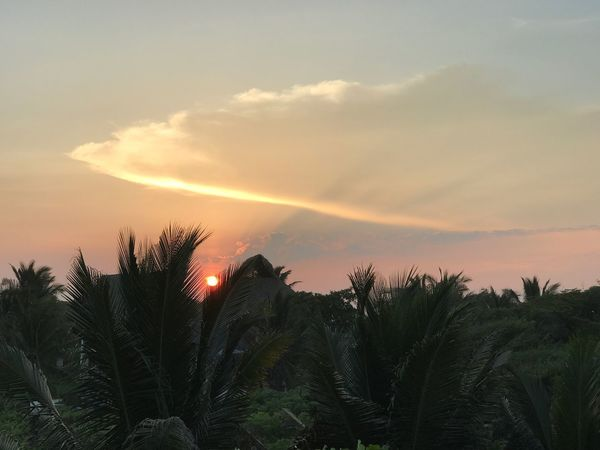 Sky Sunset Beauty In Nature Tranquil Scene Tranquility Palm Tree Guatemala Monterrico Monterrico Beach