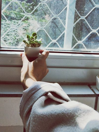 Cropped Hand Placing Houseplant On Window Sill At Home