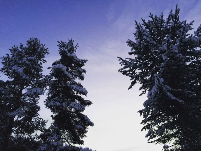 Snow covered trees in the centre of Levi, Finland. Tree Nature Tranquility Beauty In Nature Pine Tree Holiday Finland Levi Finland Cloudy Sky Weather Nature Cold Temperature Winter Snow Outdoors Scandinavia Northern Finland Arctic Circle Extreme Weather -30°C